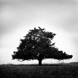 Lone Star Tree