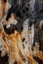 Bark Study 39