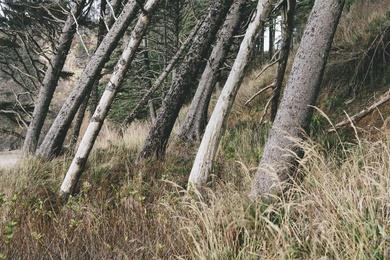 Arcadia Beach Forest I