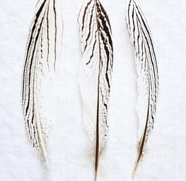 Three Feathers
