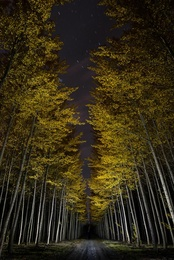 Autumn at the Tree Farm XI