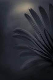 Dark Flower 3