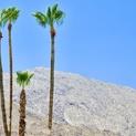 Desert Greens - Palm Springs