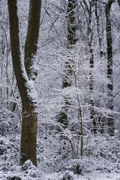 Plants Hill Wood #4 - Jan 2021