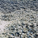 Oysterscape I