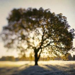 The Joy Tree