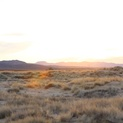 Mojave Grasses