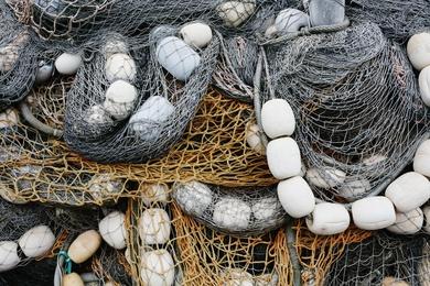 Fishnet Study #2