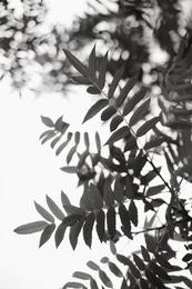 Leaf Study #1