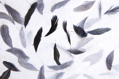 Translucent Feathers I