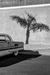 Palm Tree Packard I