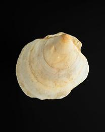 Shell #9