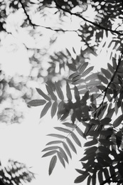 Leaf Study #3