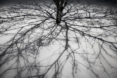 Tree Tracing II