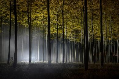 Autumn at the Tree Farm V