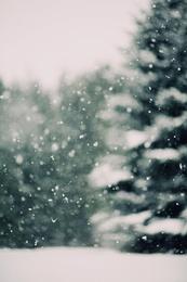 Winter Daydream #3