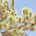 Cactus Sky #2