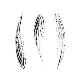 Three Feathers III