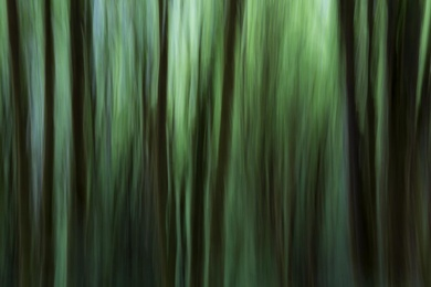 Alder Forest Abstract V