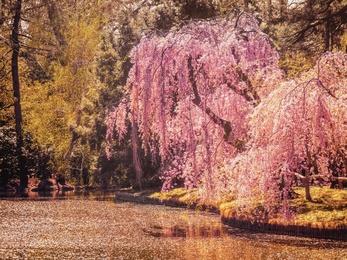 Spring - New York