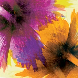 Purple Yellow [SQ]