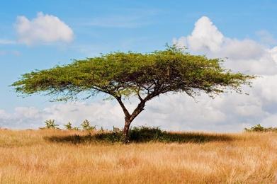 Tropical Sabana
