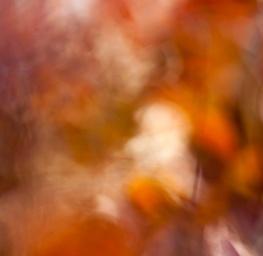 Autumn Crescendo 5