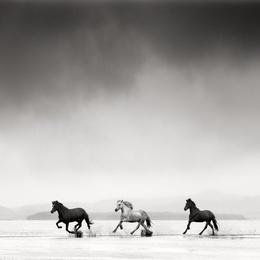 Three Horses, Iceland