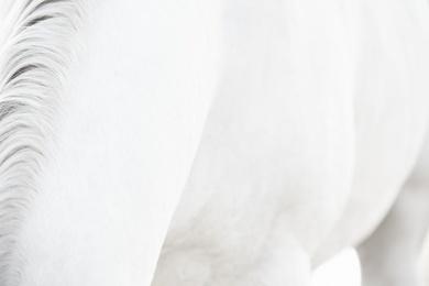 White Horse 14