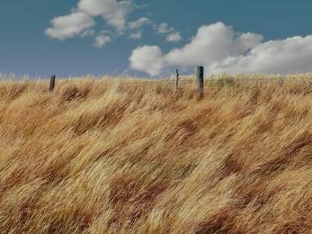 Late Summer Grass
