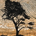 Cypress II
