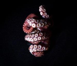 Octopus _ C