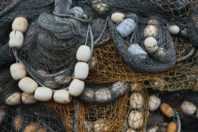 Fishnet Study #7