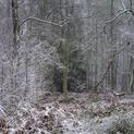 Hay Woods #9 - Jan 2021