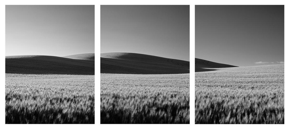 Wheat Dunes Triptych