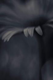 Dark Flower 2