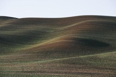 Palouse Hills XII