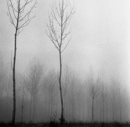 Tree Mist