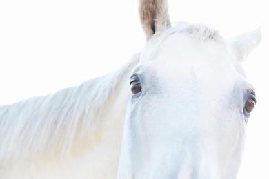 White Horse 08