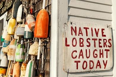 Fresh Lobster, Cape Cod, MA