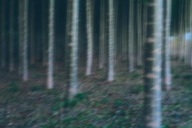 Tree Farm XXIV