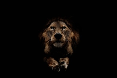 Lion in Wait