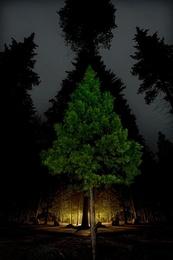 Conifer Kaleidoscope