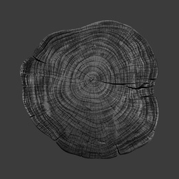Stump 1 - Variation 32