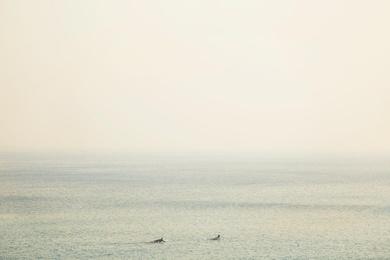 Surfers I