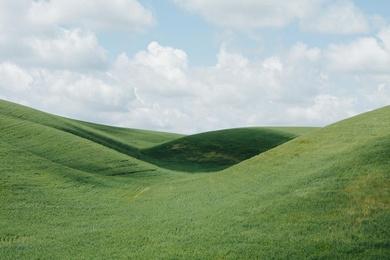 Palouse Field I