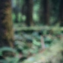 Hoh Rain Forest IV