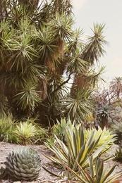 Cactus Garden #1