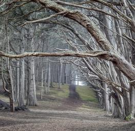 Moss Beach Cypress Trees - Fitzgerald Marine Reserve