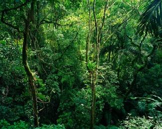 La Selva III